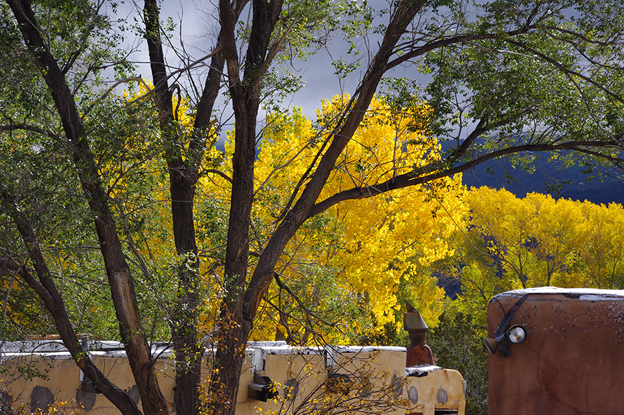 yellow cottonwoods in Taos