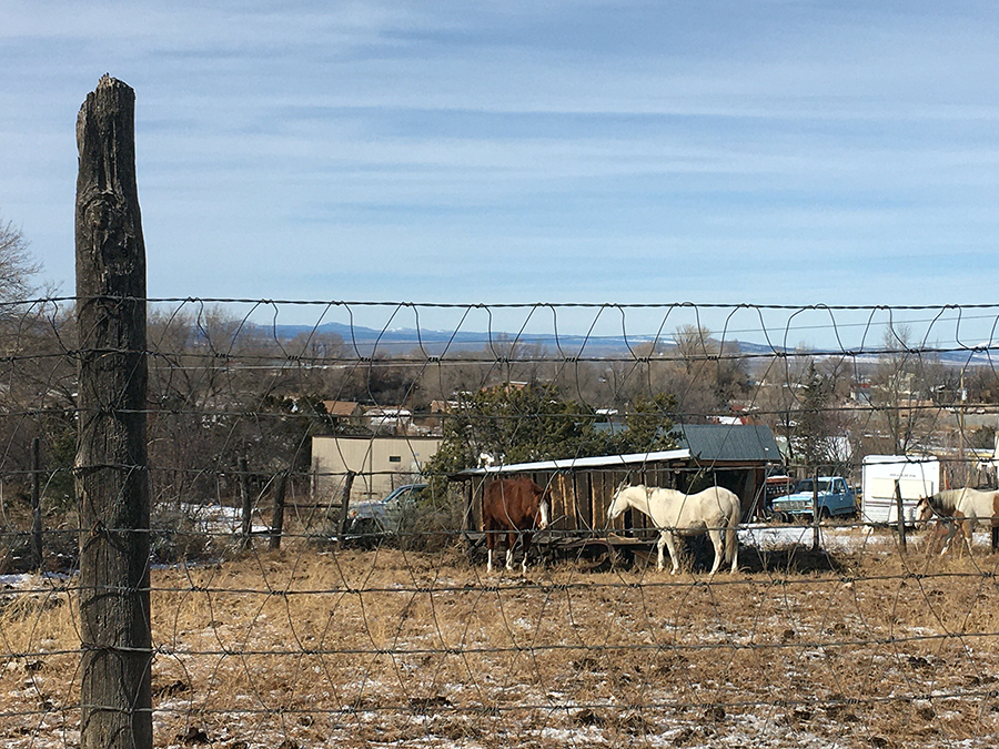 horses, fences, and mountains