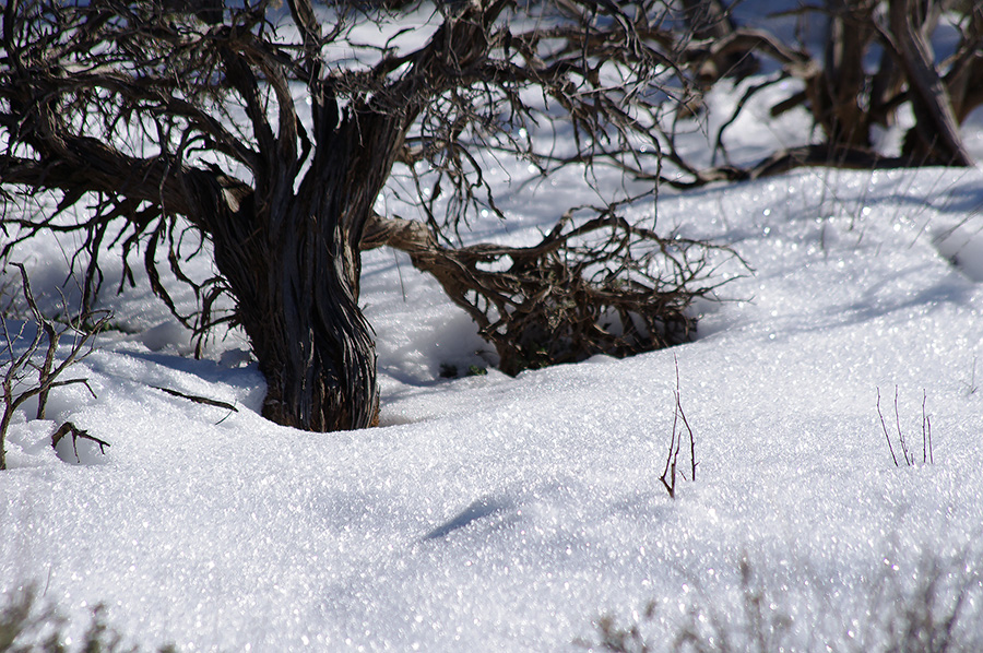 sagebrush and snow