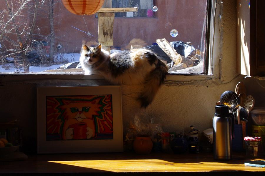 fat cat in a Taos windowsill