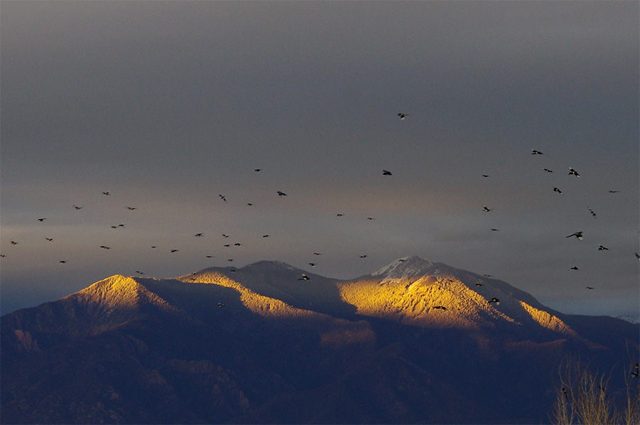 Taos Mountain with magpies