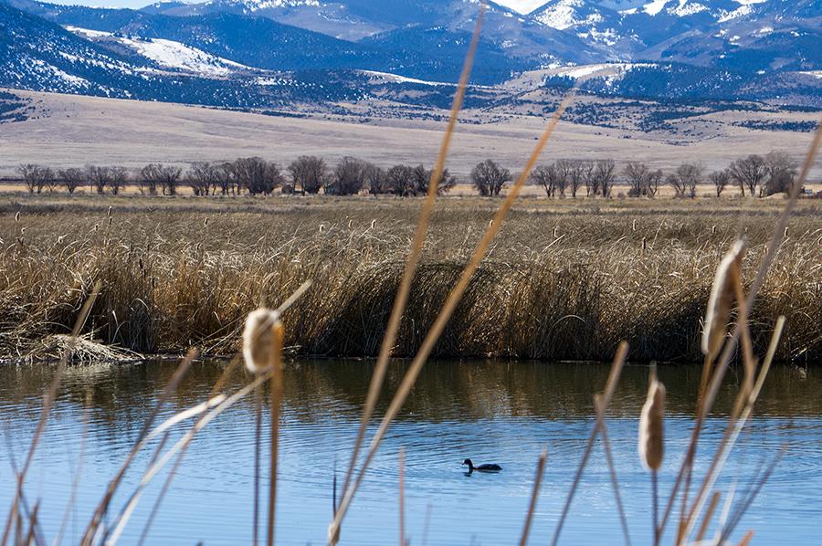 Monte Vista NWR, southern Colorado