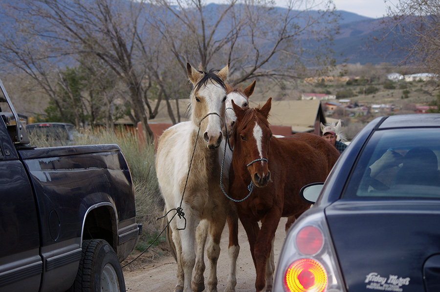 horses on a road in Taos, NM