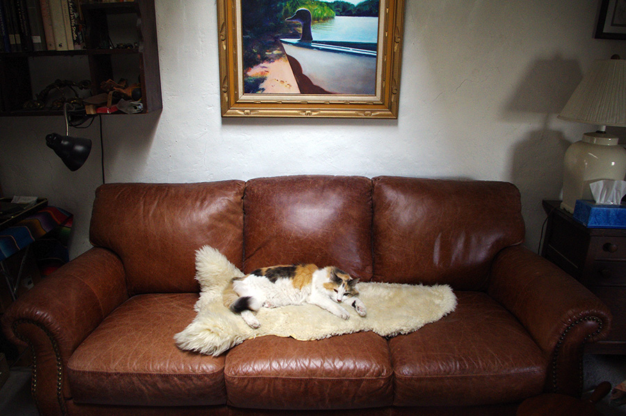 cat on sheepskin on leather sofa