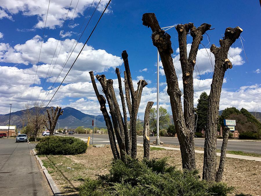 awful pruning job