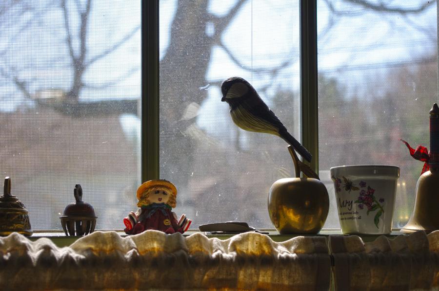window in Maine