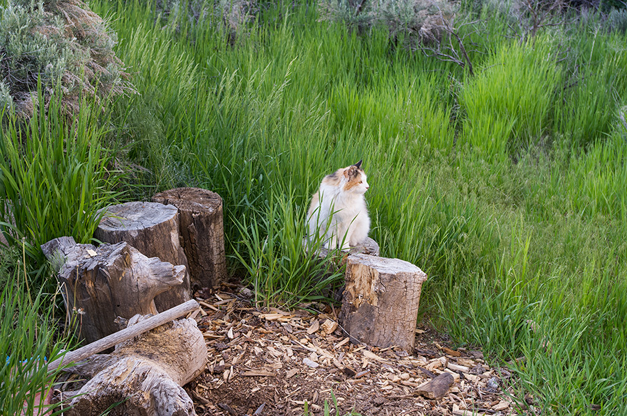 cat on stump in Taos, NM