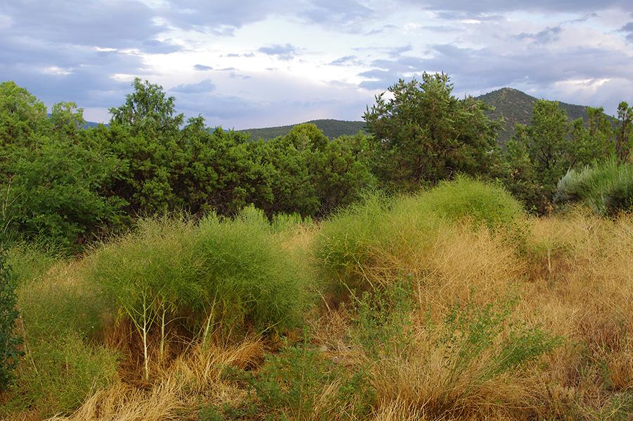 NM weeds