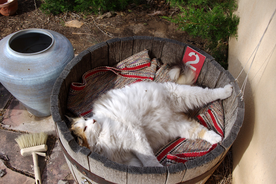 cat in a barrel