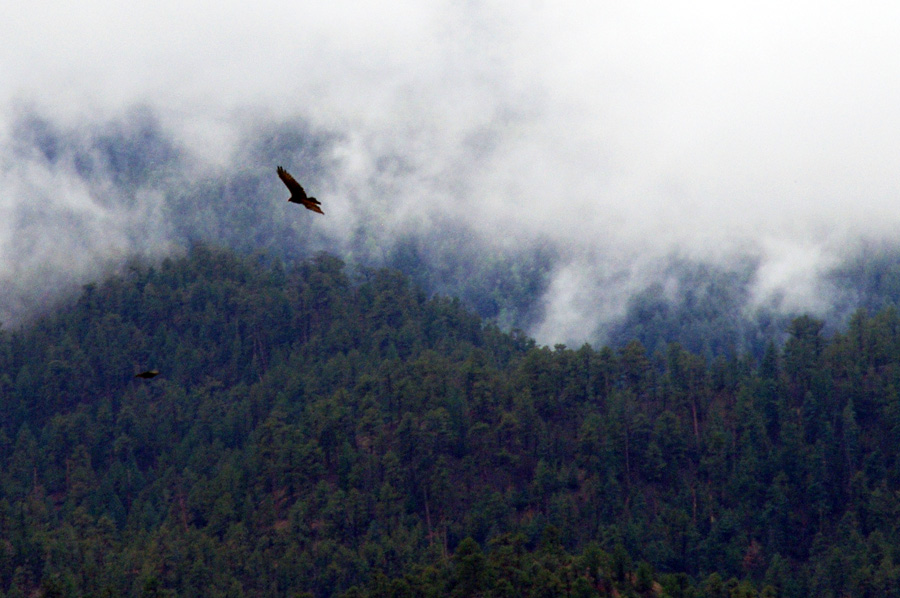 ravens in the misty mountains