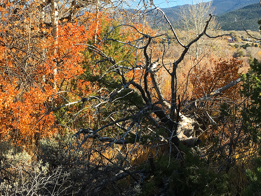 downed tree in Taos