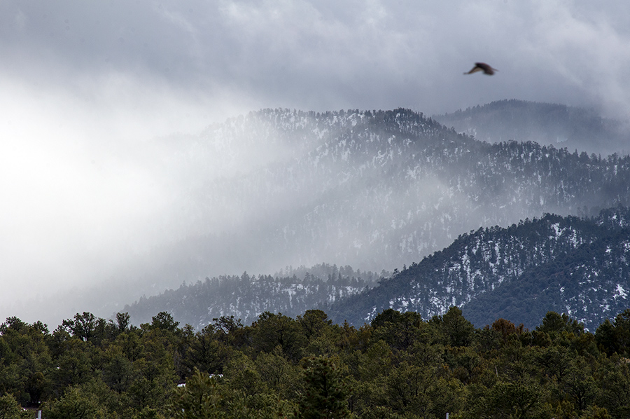 red-tailed hawk over snowy hills