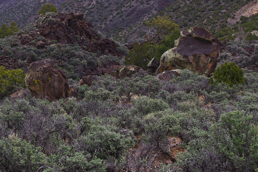 landscape at the bottom of the Rio Grande Gorge
