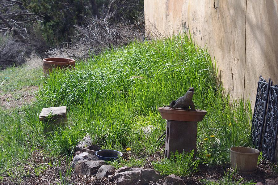 old Taos backyard